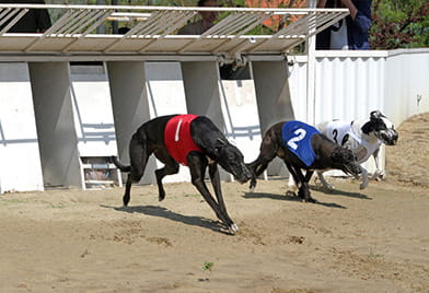 A Beginners Guide to Betting on Greyhounds